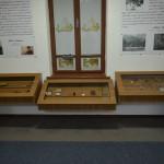 Muzeul Sadoveanu-3312