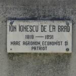 Roman Statuia II Brad-2368