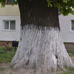 Roman Stejarul Unirii-0516