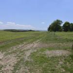 sat costisa Dealul Cetatuia-7701