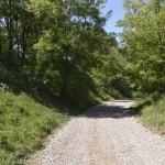 sat costisa Dealul Cetatuia-7705